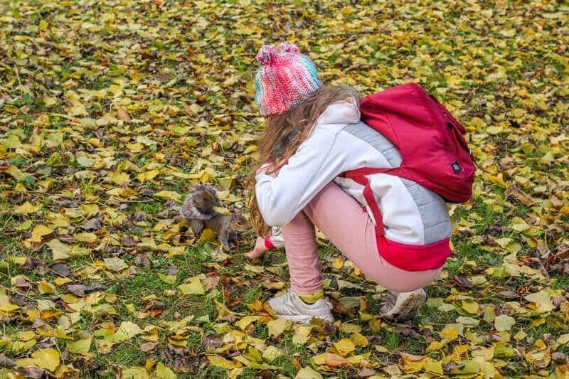 Feed squirrels at The National Botanic Gardens of Ireland