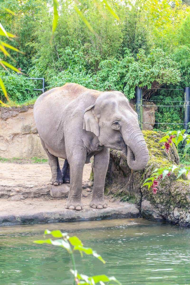 Dublin zoo elephant habitat