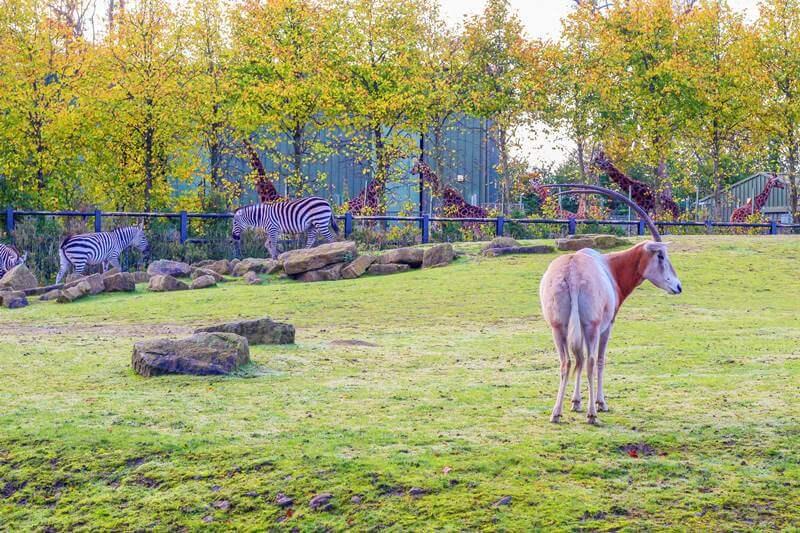 Dublin Zoo African plains