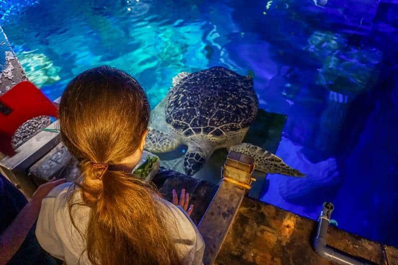 Sealife Porto feeding the turtle