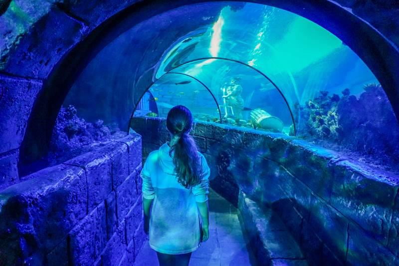 Sealife Porto Portugal underwater tunnel